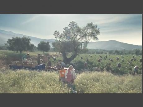 Frito Lay / Lays – Harvest